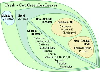effect of green and black teas essay Green tea vs black tea - know the major differences between these two  -pure  organic green tea creates a detoxifying effect, giving you.
