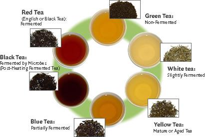 Our Menu — Kung Fu Tea